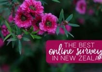13 Best Paid Online Survey Sites in New Zealand [2021 Guide]