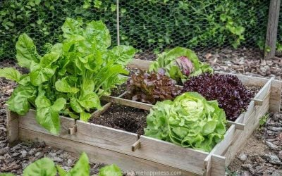 8 Practical Tips For Growing Vegetables on a Budget